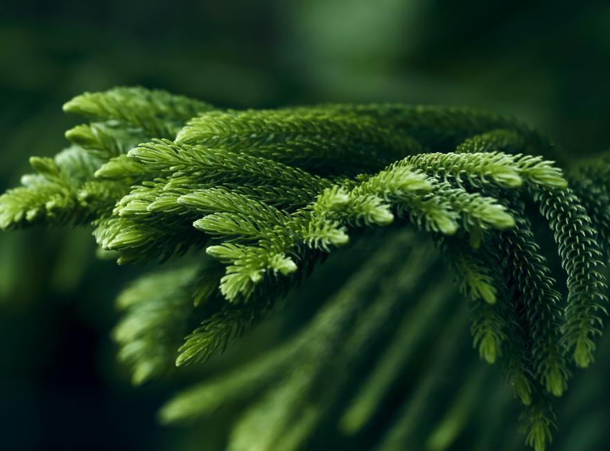 Hệ truyền động Ecosilent Thân Thiện với môi trường